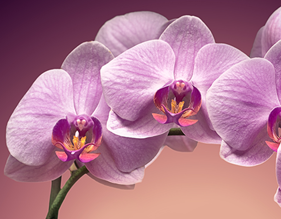 A small tribute in orchids