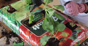 Λαχανόκηπος στο μπαλκόνι